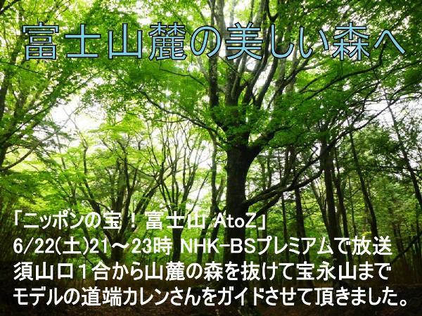 P1070432.jpg